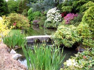 Китайский сад, водоем