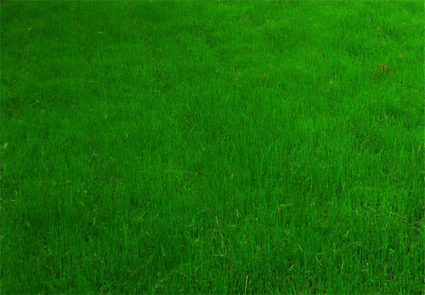 живая трава фото