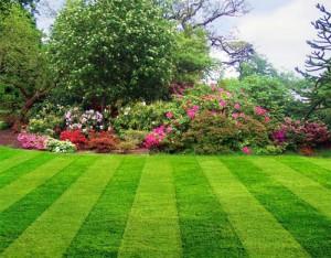 Партерный газон своими руками