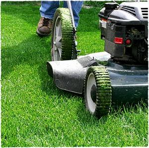 Уход за газоном, стрижка травы