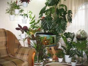 Зимний сад в гостинной
