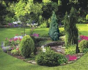 Хвойные растения и ландшафтный дизайн