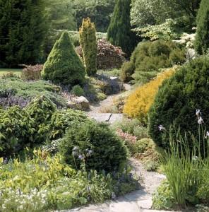 Хвойные растения и горный ландшафт, великолепие на вашем участке