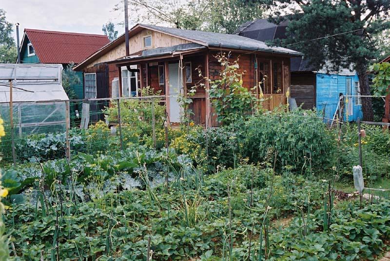 Сад или огород что выбрать