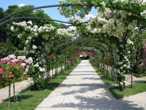 Розарий украсит любой сад