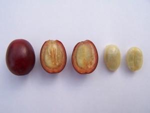 Кофейные семена