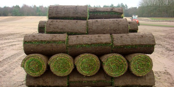 Разновидности рулонного газона