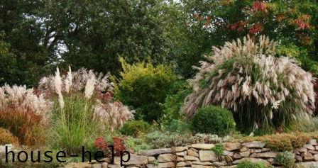 Прерийный сад в ландшафте