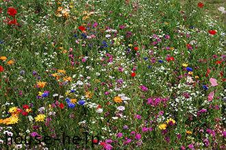 Все сорта подобранных растений обязаны быть низкорослыми