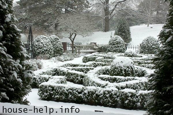 Картинки сад зимой