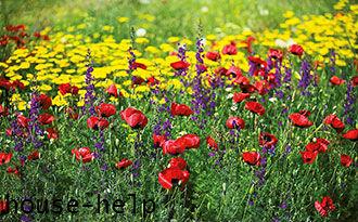 Сад в мавританском стиле – это своего рода луг с яркими цветками и сочной травой, который радует не только взор, но и душу