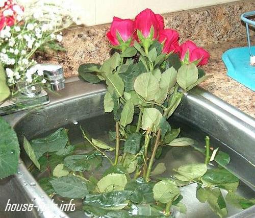 Можно наполнять на ночь раковину или ванну и перекладывать туда розы
