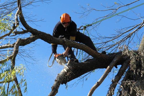 Преимущества удаления деревьев