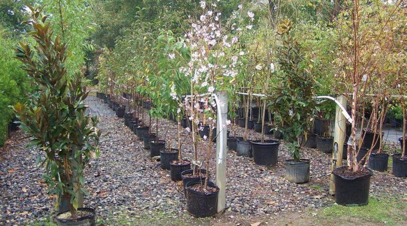 Как правильно выбрать саженцы деревьев?